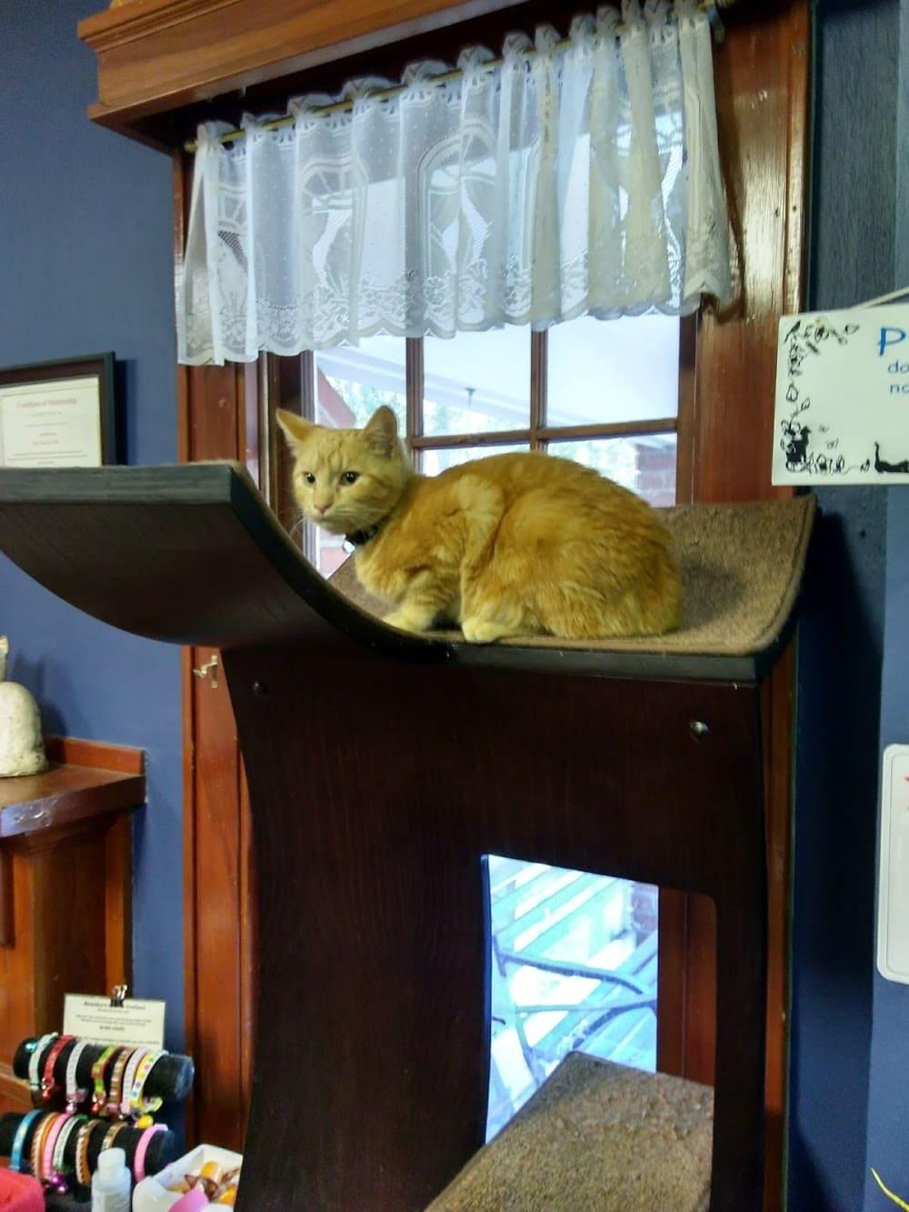 All Cats Healthcare Clinic: Patti Gordon, DVM