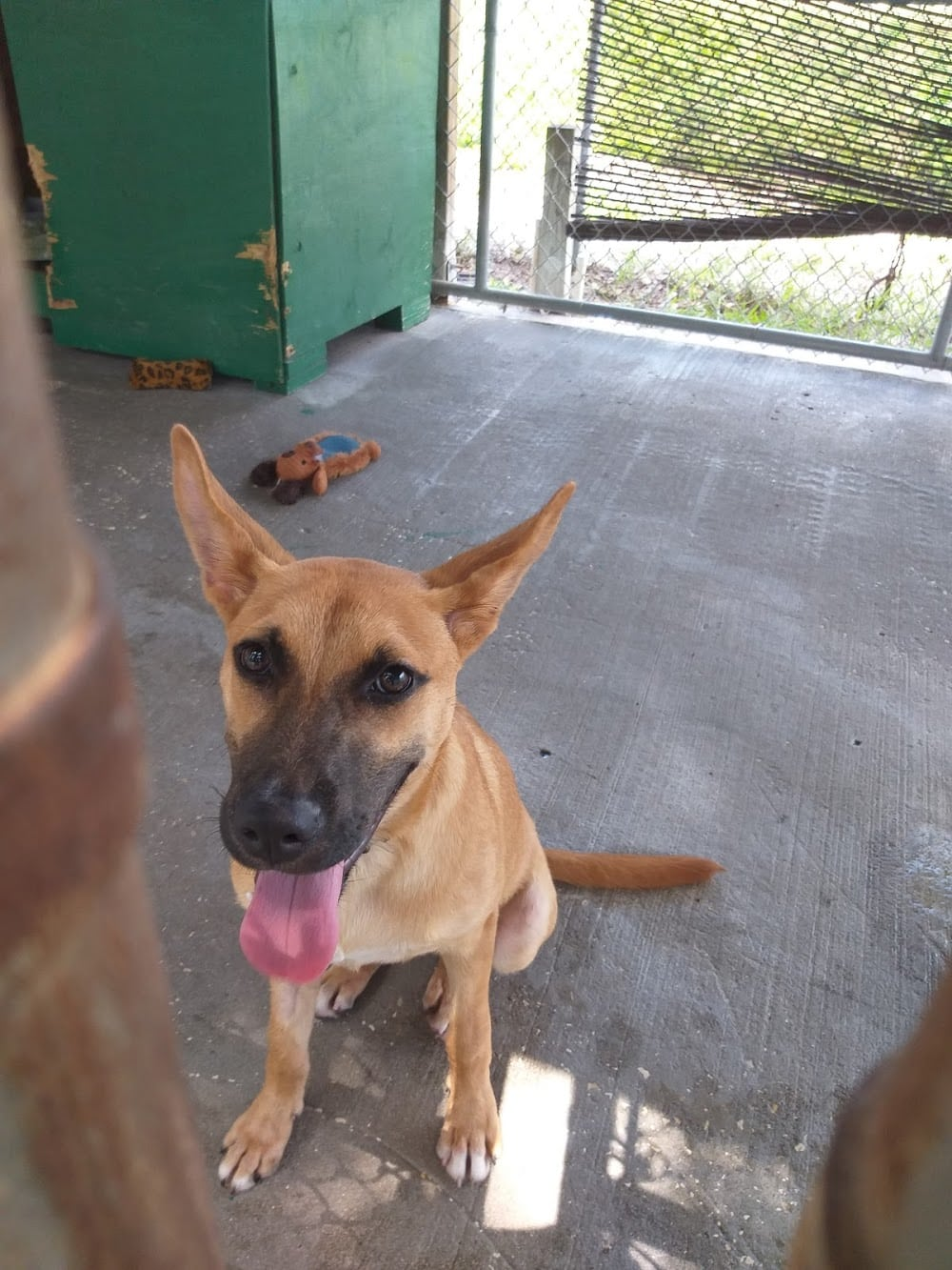 Animal Rescue of West Pasco