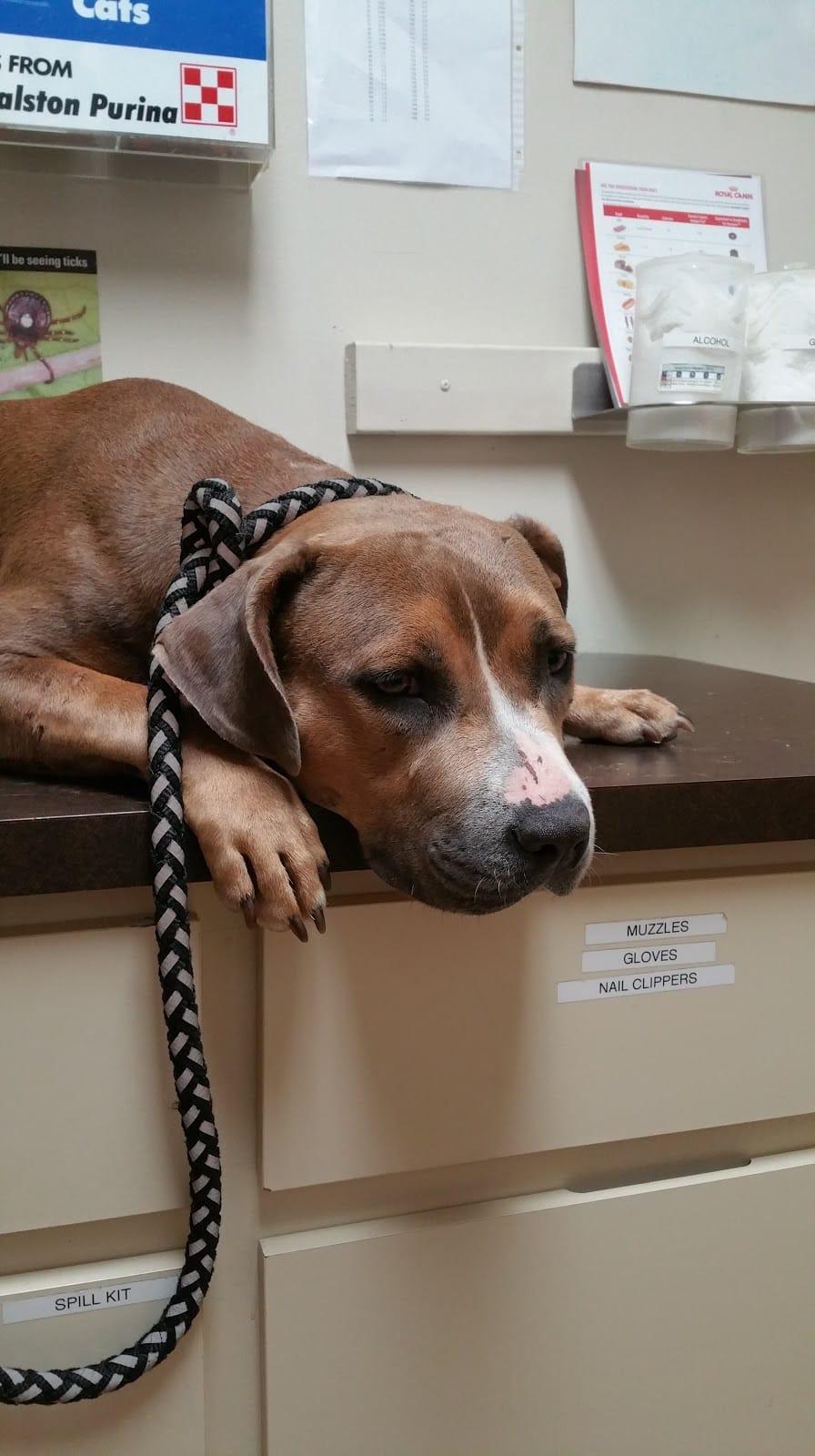 Crescent City Animal Health Center