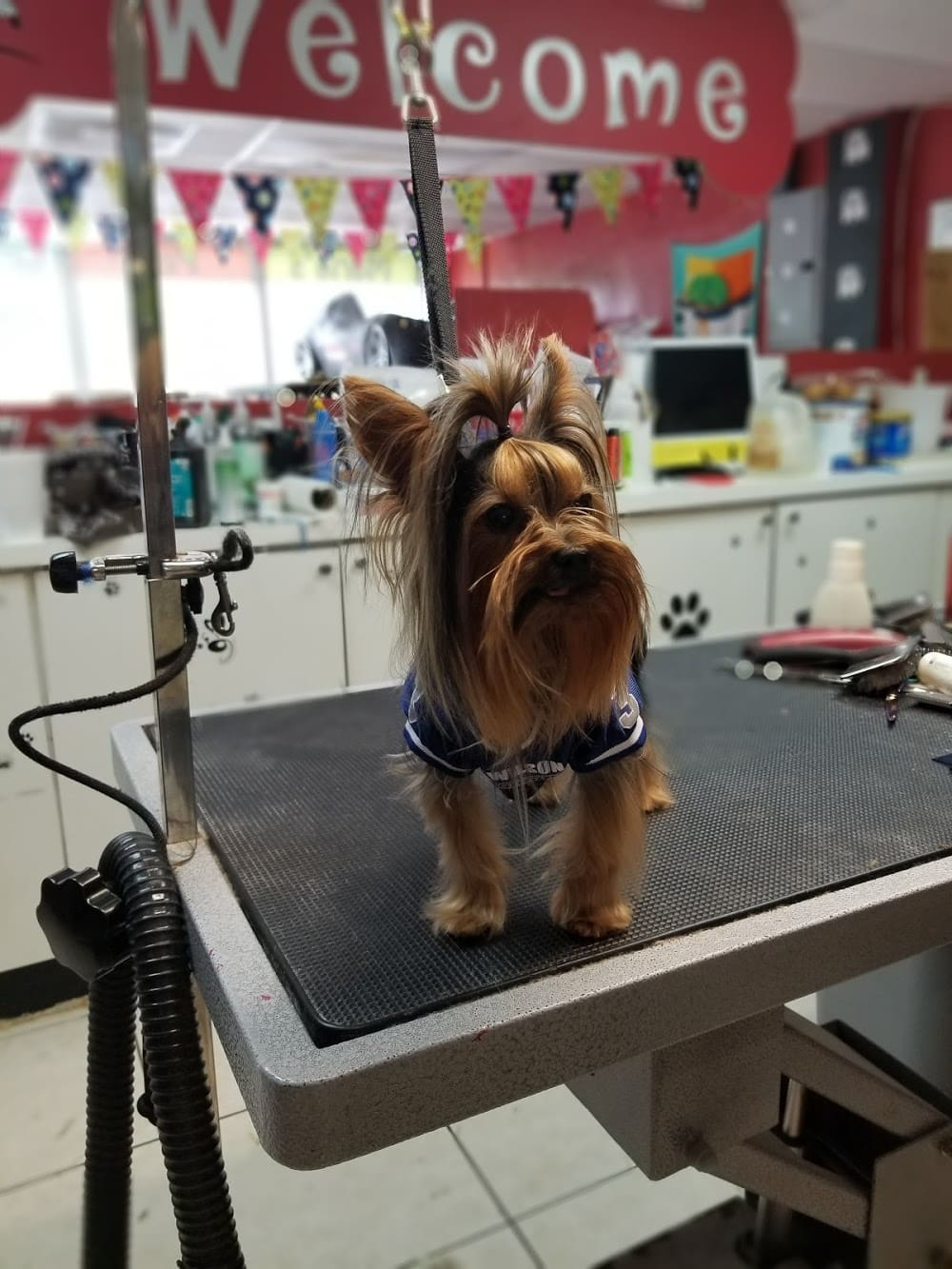 Maria's Pet Grooming and Daycare