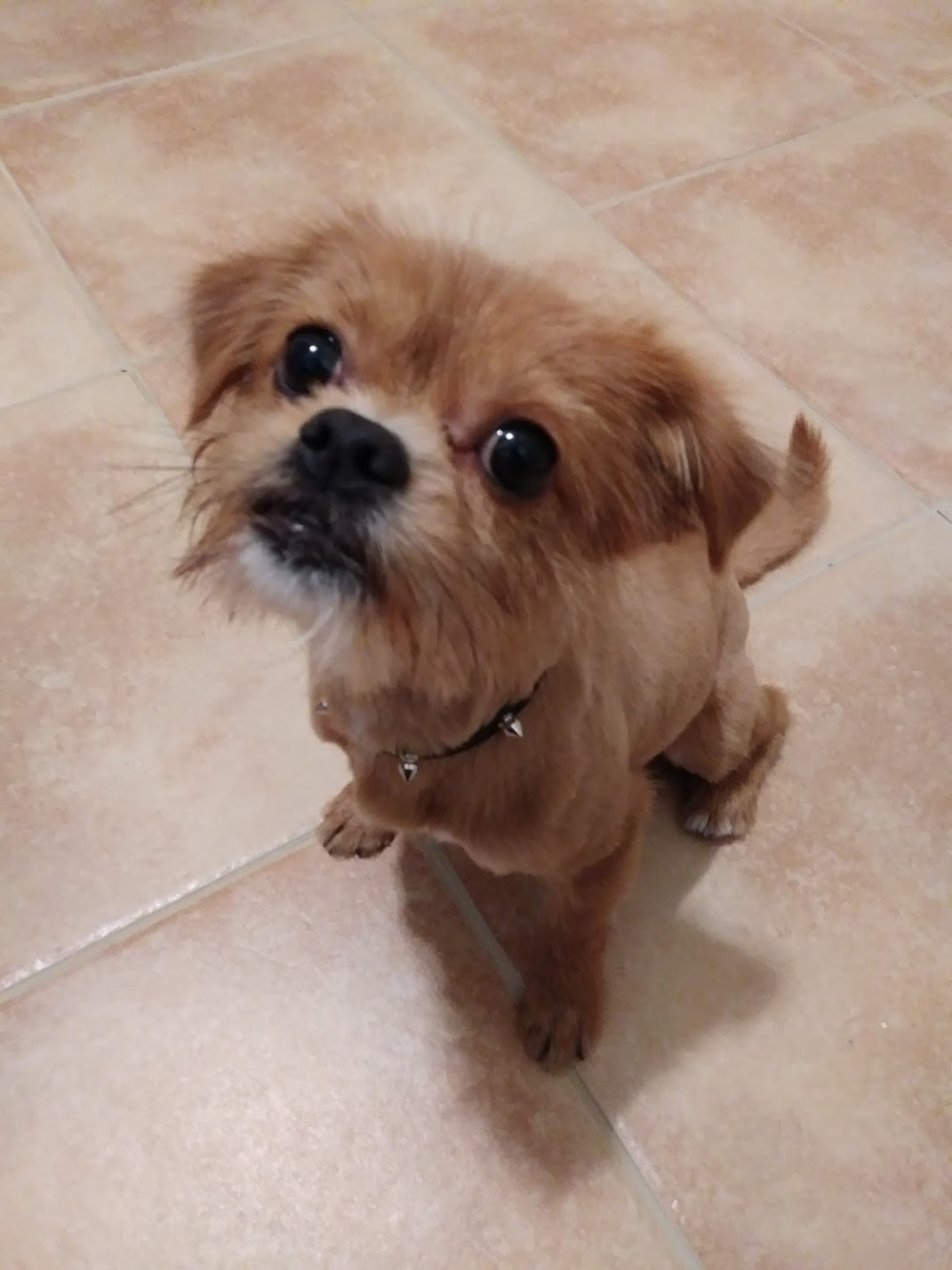 Mobile Pet Dog Grooming Homestead Fl