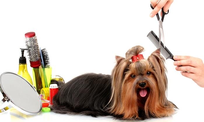 Neo Pet Spa – Cat & Dog Grooming