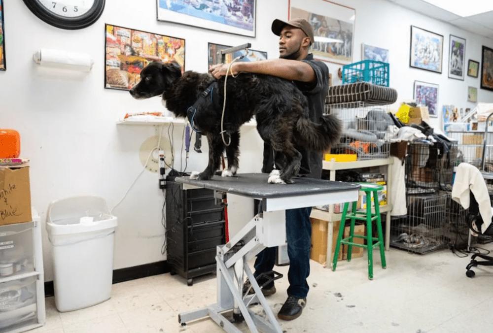 Pat's Pedigree & Pet Grooming