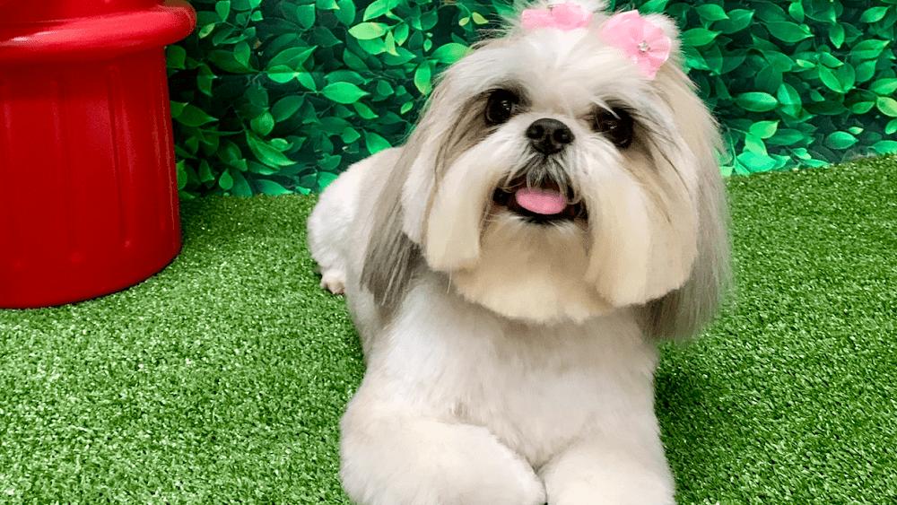 Pet Avenue Grooming & Boarding
