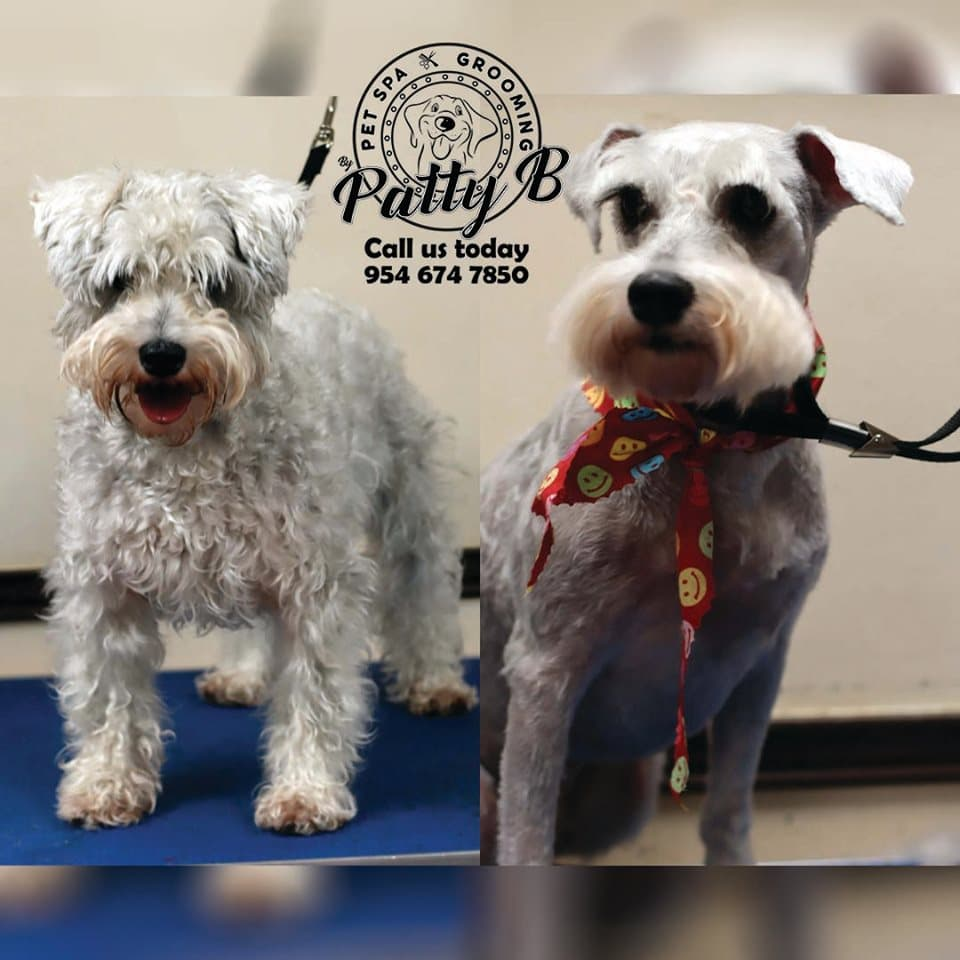 Pet Spa Grooming By Patty B