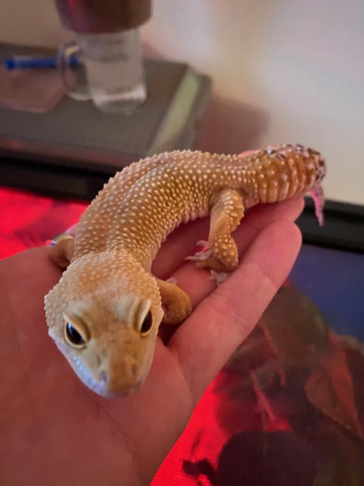 Santucci Small Animal And Reptile Rescue
