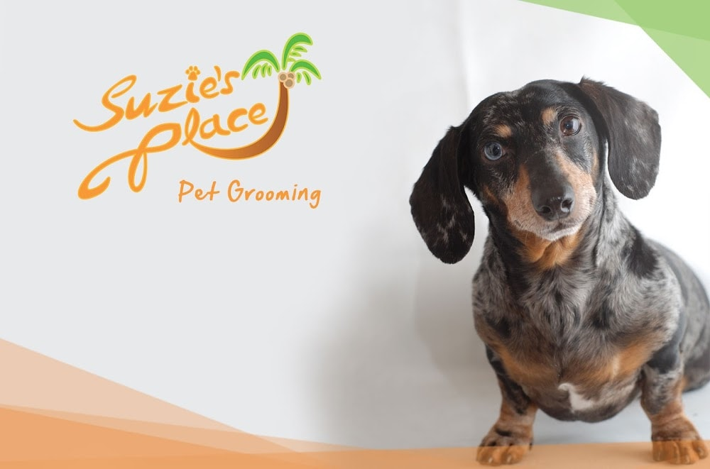 Suzie's Place Pet Grooming