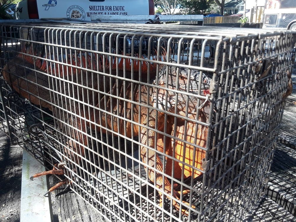 Wildlife Rescue & Rehab