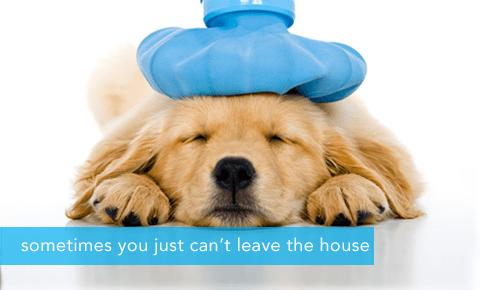Your Home Pet Vet