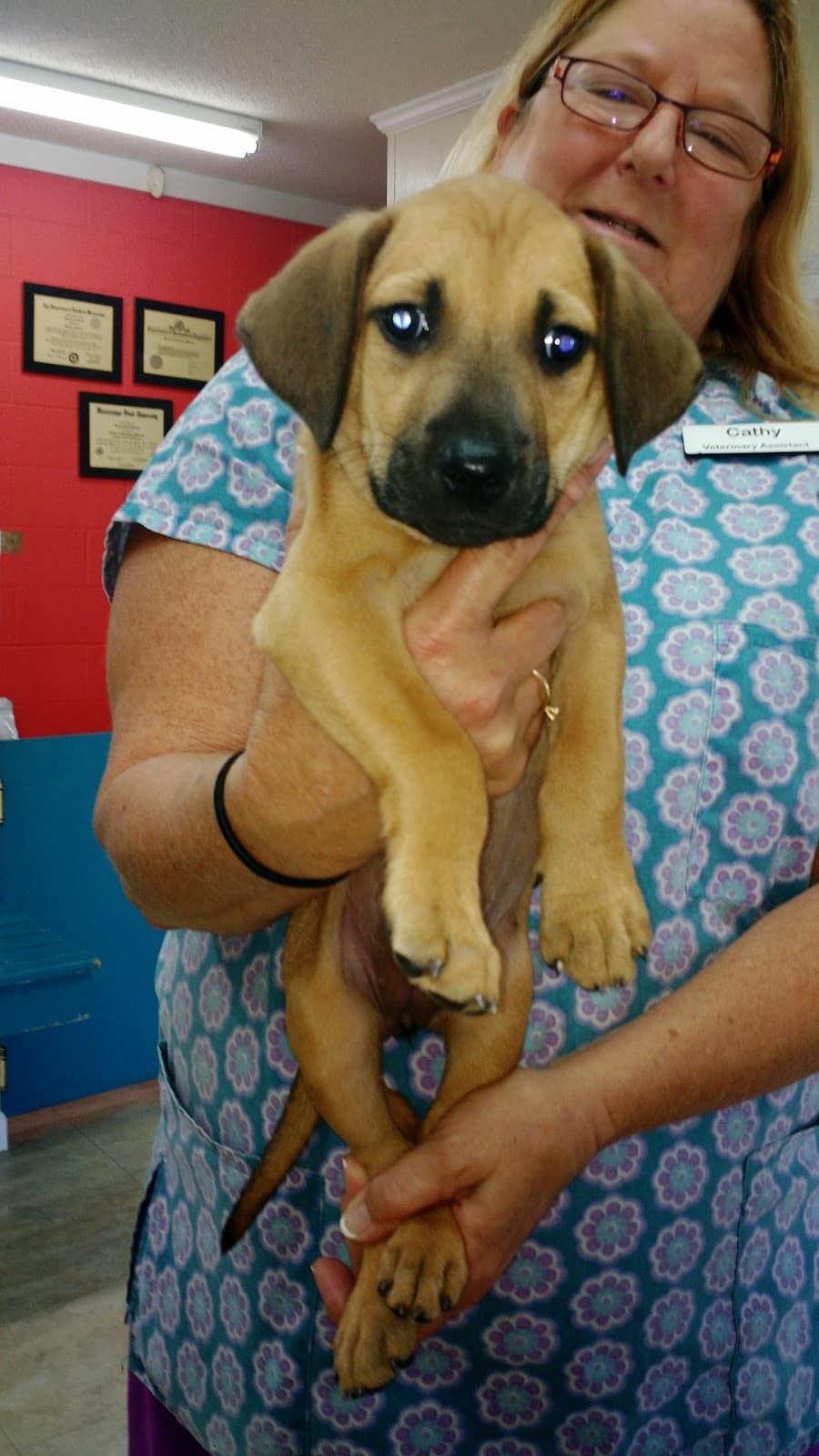 Airport Veterinary Clinic: Ratcliff Misha DVM