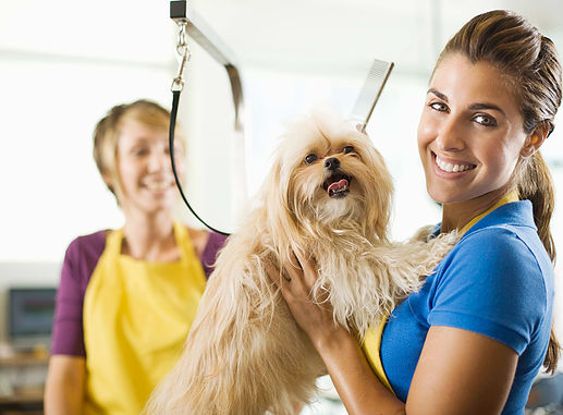 All Pets Grooming & Boarding