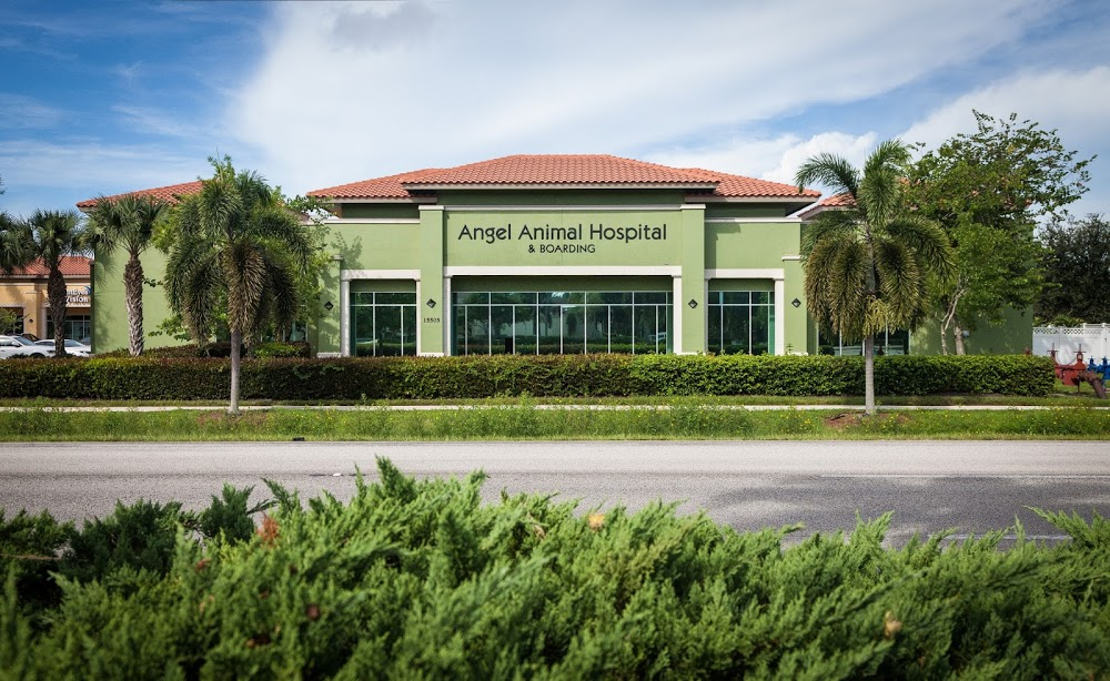 Angel Animal Hospital & Boarding