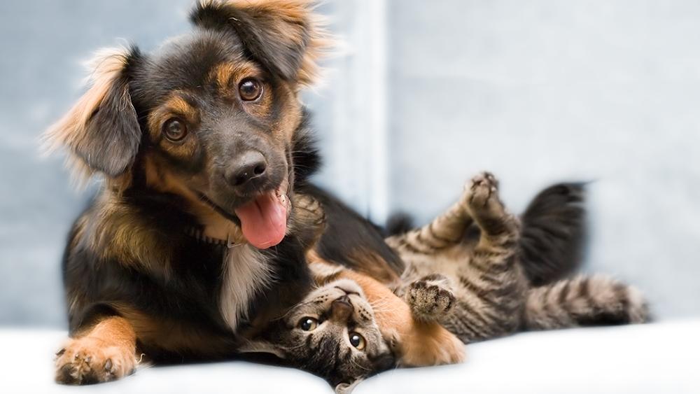 Archie Kleopfer Veterinary Care Clinic