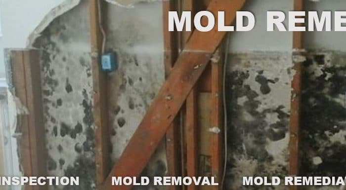 Catstrong Mold Inspection and Removal Pace