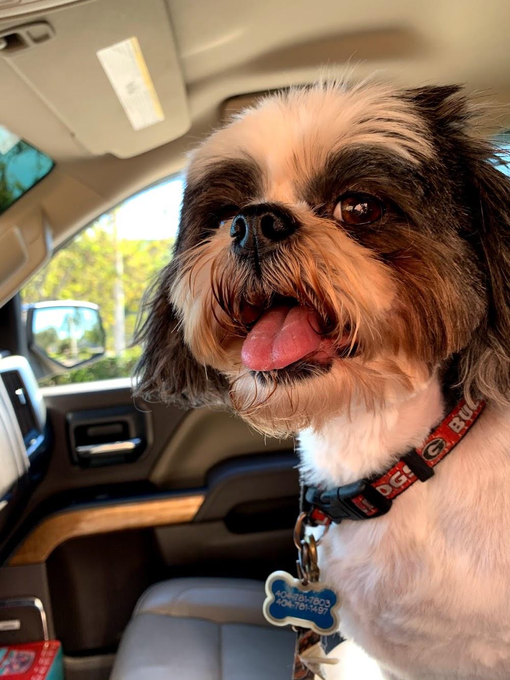 Dog In Sudz Grooming