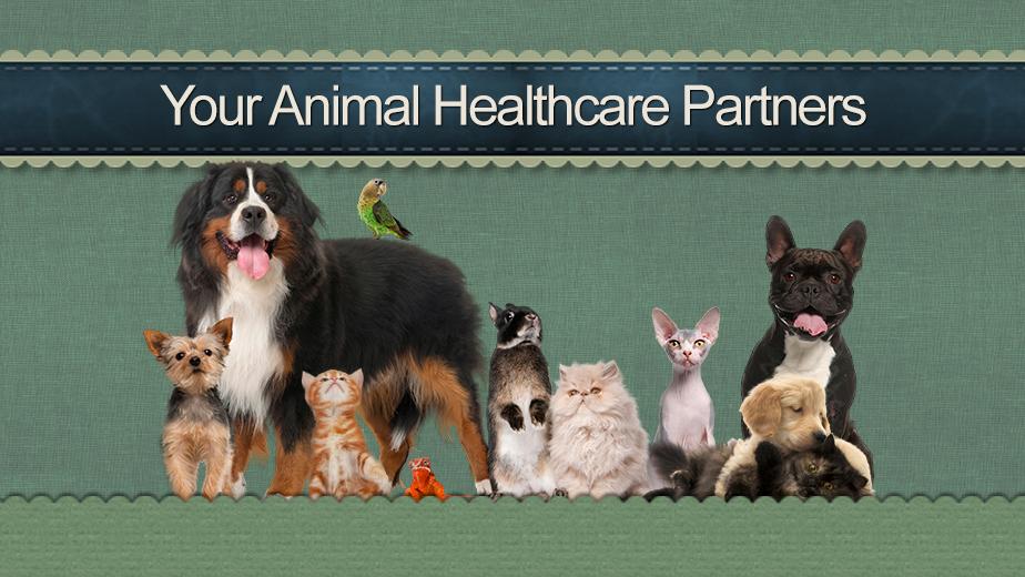 Morningside Animal Hospital