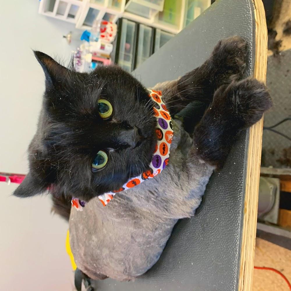 Pet Grooming & More