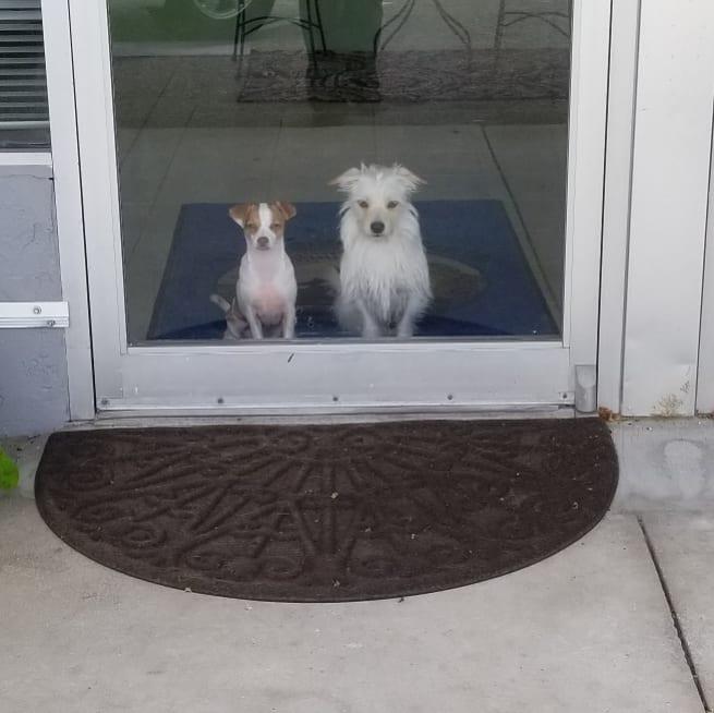 Pet Wellness Center LLC