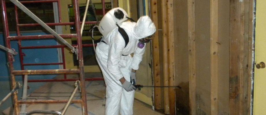 Catstrong Mold Inspection and Removal Saint Petersburg